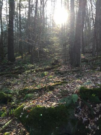 Beaver, WV: Beautiful forest