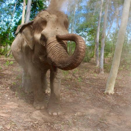 Elephants at the center - Picture of Wildlife Friends of ...