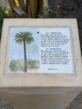 photo3.jpg - Picture of Palm Groves (Palmeral) of Elche, Elche - TripAdvisor