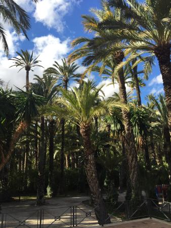 photo6.jpg - Picture of Palm Groves (Palmeral) of Elche, Elche - TripAdvisor