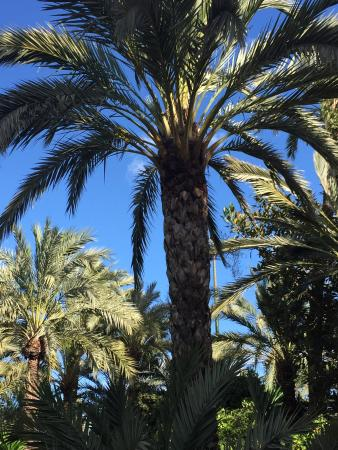 photo7.jpg - Picture of Palm Groves (Palmeral) of Elche, Elche - TripAdvisor