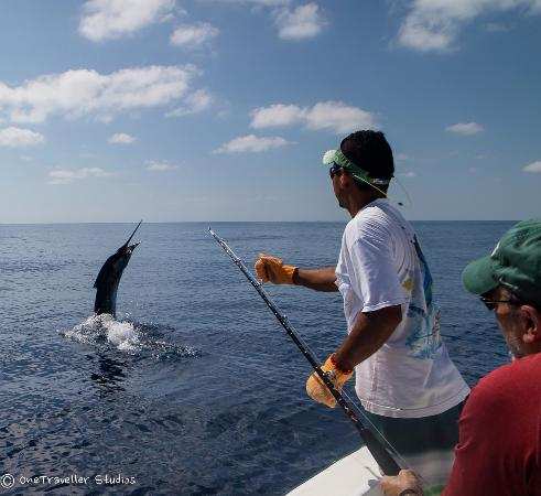 day 2 sailfish m picture of quepos fish adventure