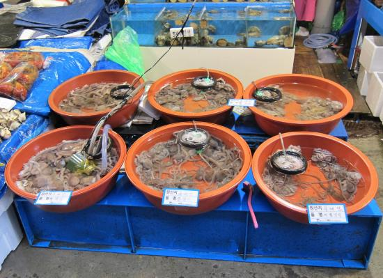 Live food picture of noryangjin fish market seoul for Live fish food