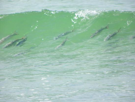 Waves were big beach was fun picture of stump pass for Fishing in englewood florida