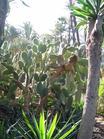 vista parco - Picture of Palm Groves (Palmeral) of Elche, Elche - TripAdvisor