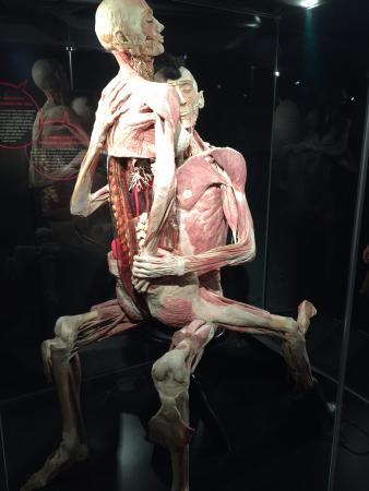 body worlds amsterdam   picture of body worlds the happiness project