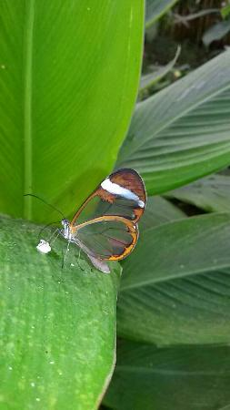 IMG-20141226-WA0010_large.jpg - Picture of Butterfly Park of Benalmadena, Ben...