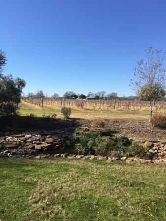 Bryan, TX: Grounds behind tasting room in Jan