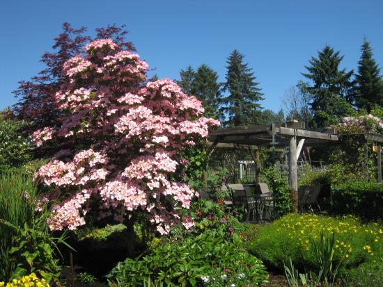 Comox, Canada: Beautiful Cherry blossoms