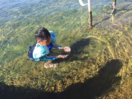 Toyahvale, TX: Swimming with the fishes