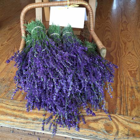 East Marion, NY: lavender bouquet