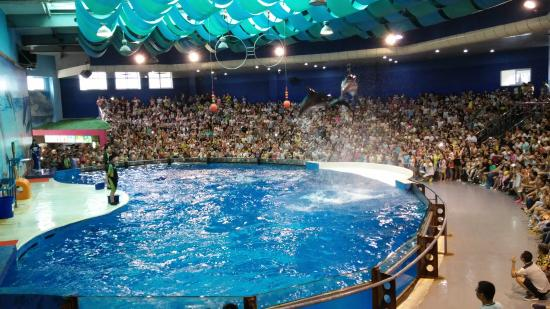 Photos of Nanjing Underwater World, Nanjing - Attraction Images ...
