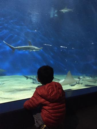 Photos of Aqua World Ibaraki Prefectural Oarai Aquarium, Oarai-machi - Attrac...