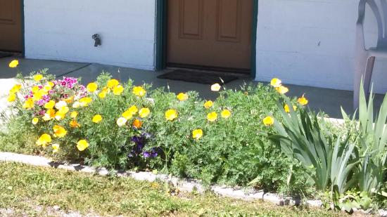 Bayview, ID: Always flowers in the spring, summer, and fall