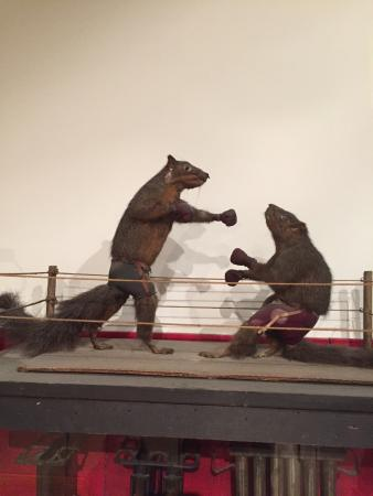 Platteville, WI: Who doesn't love boxing squirrels?