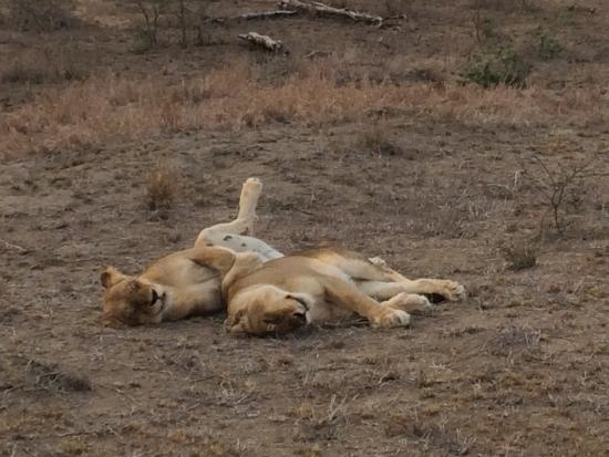 Klaserie Private Game Reserve, South Africa: photo0.jpg
