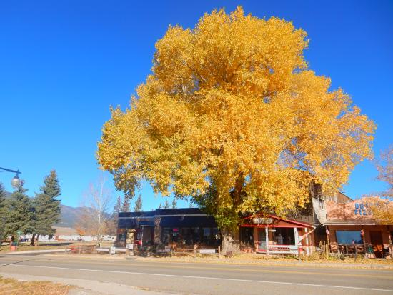Eagle Nest, NM: Front of the Cottonwood Lodge