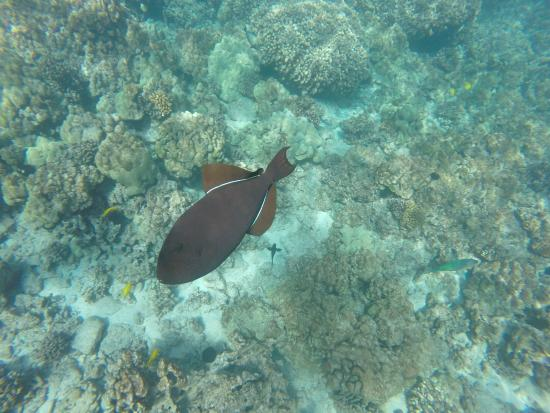Keauhou, HI: up close and personal with the fish