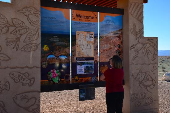 Amargosa Valley, NV: Anita checks out the display at the Refuge entrance