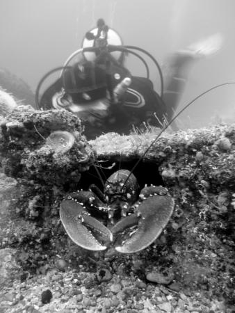 Castlerock, UK: Red Duck Diving Photography Courses available