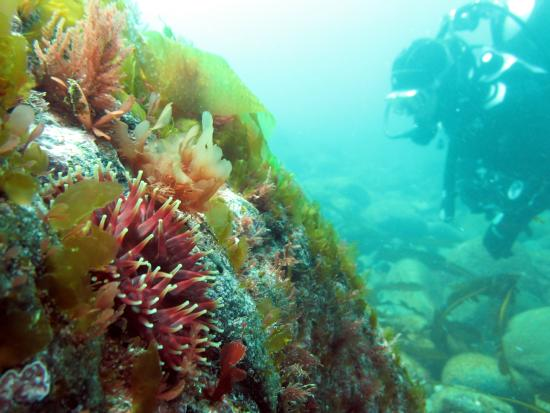 Castlerock, UK: Red Duck Diving Individuals and Groups welcome