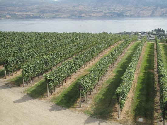 West Kelowna, Canada: Mission Hill Family Estate Winery