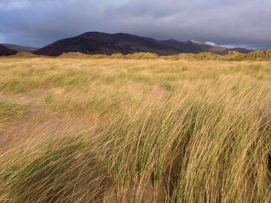 Inch, Ireland: From the dunes to the NW.