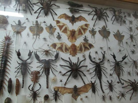 some of the unusual insects found in Thailand