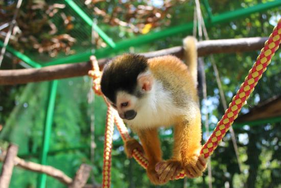 Dominical, Costa Rica: Ready to release but generates $$$ so kept in a Cage