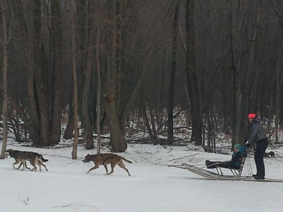 Orillia, Canada: Dog Sledding