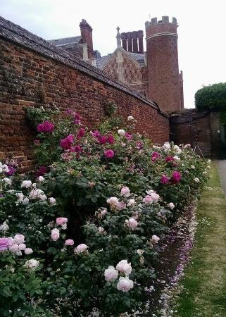 East Molesey, UK: Best parts of Hampton Court: gardens and tea in the courtyard cafe.