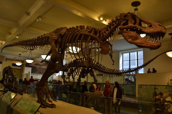 Natural History New York Prices