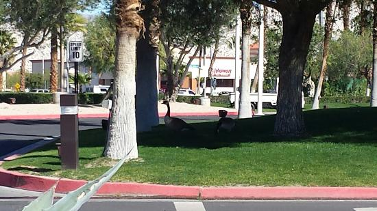 Cathedral City, CA: 20160209_120120_large.jpg