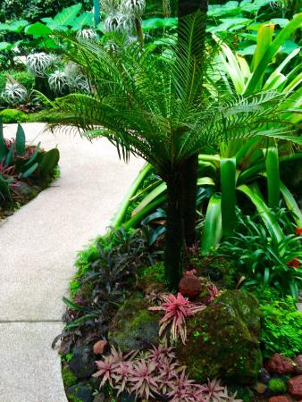 Jardin botanique de singapour picture of singapore for Au jardin singapore botanic gardens