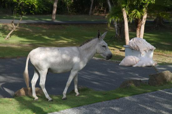Caneel Bay, St. John: Loved the donkeys... they were friendly!