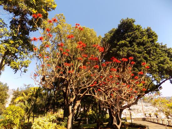 Nice Tree Picture Of Presidential Palace Garden Funchal