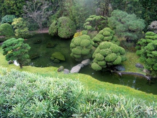 Landscaped hill and waterfall picture of japanese tea for Plants around ponds
