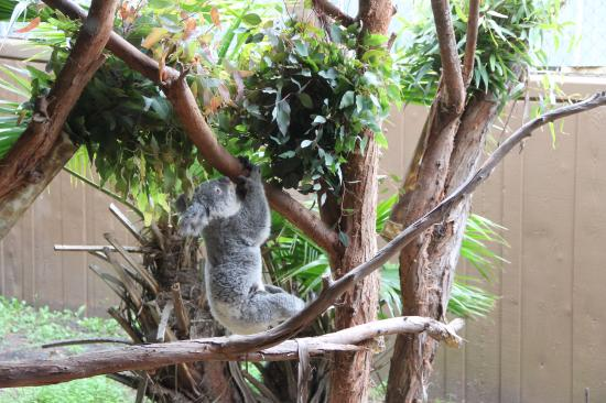 Cute Outdoor Decor Picture Of Riverbanks Zoo And Botanical Garden Columbia Tripadvisor