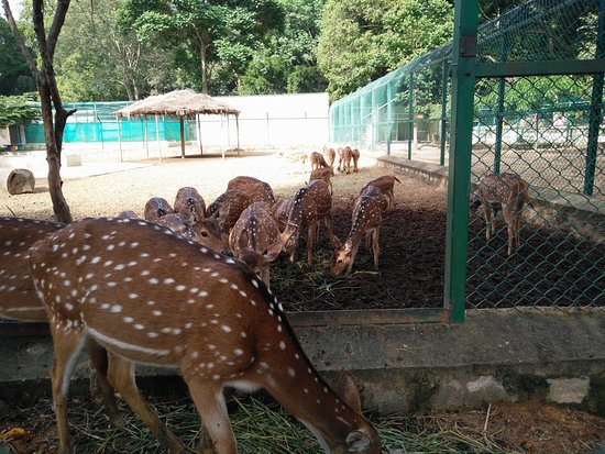 How to Reach Bannerghatta National Park from Bangalore