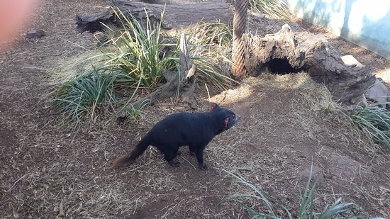 Discussion on this topic: 28. Bonorong Wildlife Sanctuary, 28-bonorong-wildlife-sanctuary/