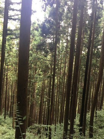 mt. mitake (ome) - 2018 all you need to know  you