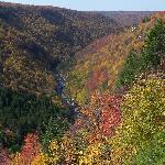Fall foliage at Blackwater Falls State Park