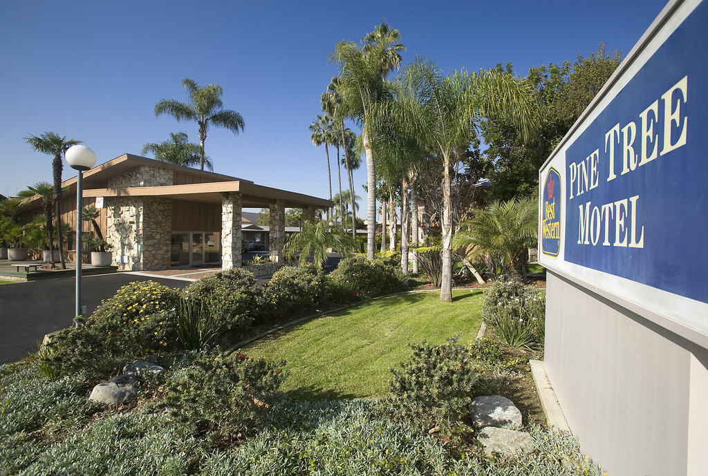 ‪BEST WESTERN Pine Tree Motel‬
