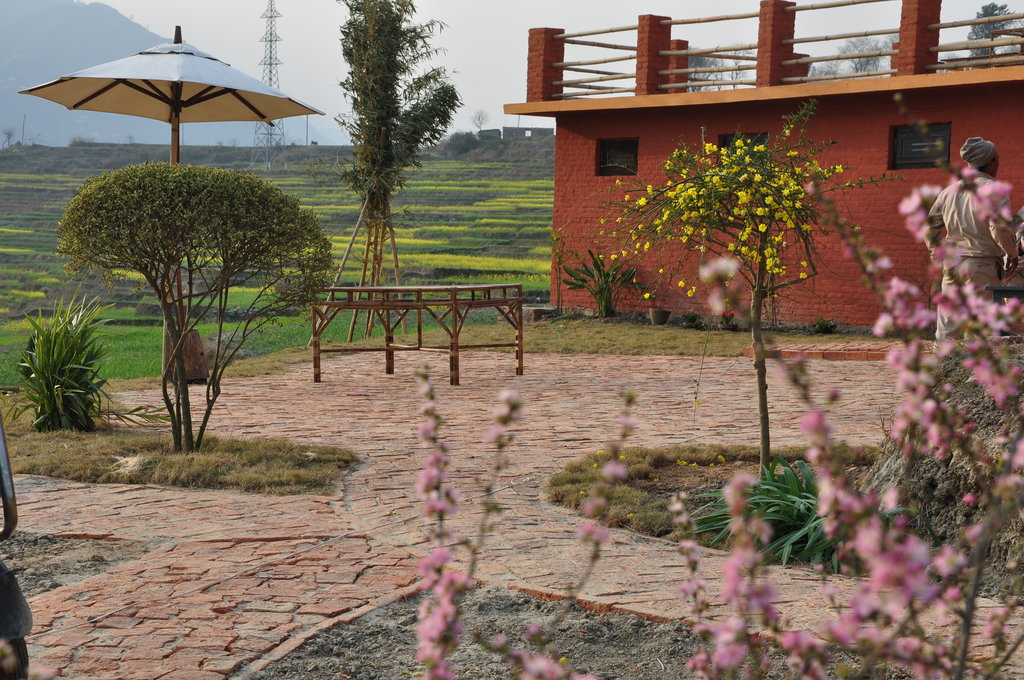 The Little House in the Ricefields