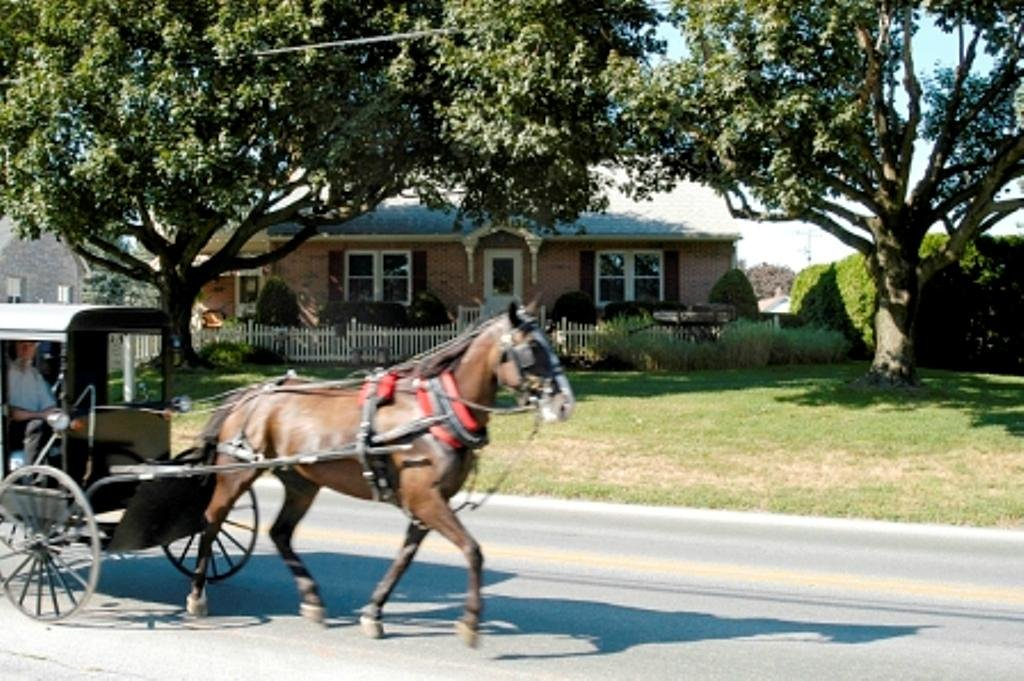 Amish Guest House and Cottage