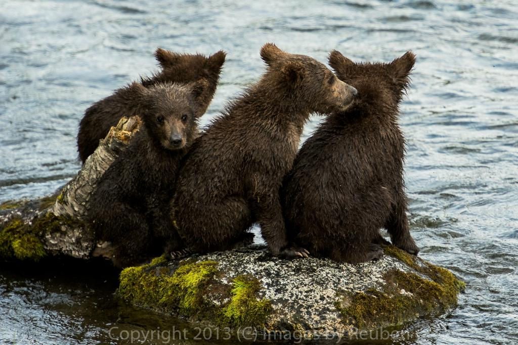 Katmai Adventure Lodge