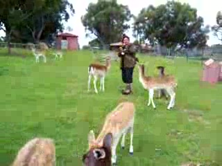 Perth, Australie : Feeding Kangaroos 