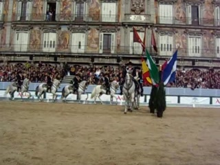Andalusian Horses in Plaza Mayor