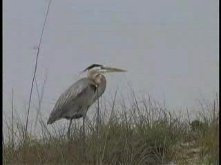 St. George Island Video