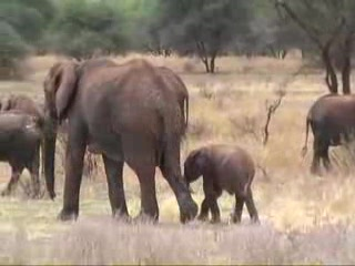 Video Tour of Tarangire National Park